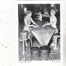 """Ladies Sorting Strawberries"" @ Farmers Mkt -*Plant City, Fl (A13-2) /Post Card/"