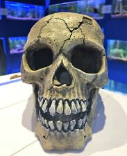Large Skeleton Cracked Creepy Skull Aquarium Ornament for Fish Tanks 350