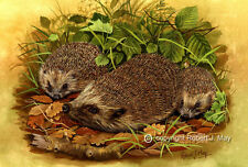 Paintings/Posters/Prints Hedgehog Collectables