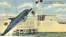 Pudgy Porpoise Marine Studios 1952 Postcard Marineland Florida