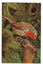 ROBIN British Birds NOT the same US Bird Salmon Series England Postcard