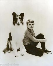 Lassie and Timmy Classic Portrait Lassie Collie Dog TV Show Great Photo Lassie