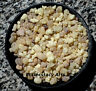 White Frankincense Incense Resin Granular 1/2 1 2 4 16 oz 1 Lb Bulk No Filler