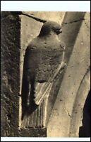 """Motiv-Karte Vogel Falke """"das Tier in Plastik"""" Skulptur; alte Postkarte"""
