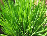 De Ree Seeds Herbs Grow Your Own Chives Vegetables Plant Home
