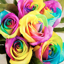 100Pcs Rare Rainbow Rose Flower Seeds Planting Garden Home Art Decor Seed Gifts
