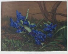 OLD FLOWER PRINT SCILLA TAURICA HYACINTHACEAE c1893