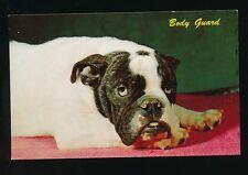 Dogs ENGLISH BULLDOG Body-Guard USA unposted c1940/50s? PPC