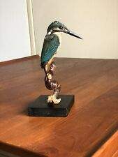 Real Kingfisher Taxidermy -Taxidermie Naturalisé Empaillé Natural History