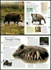 Wold Boar #45 Mammals - Discovering Wildlife Fact File Fold-Out Card