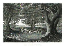 Engraving  GROVE OF TUTTI TREE   from Wilkes  U.S. Exploring Expedition 1845