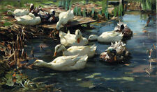 Landscape Oil painting Alexander Koester - Ducks in a Quiet Pool canvas