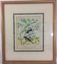 Cassell's Canaries and Cage Birds 1880s Color Lithograph Professionally Framed