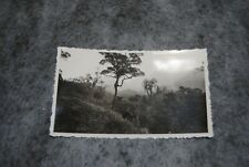 (ETA) photo vintage 1930- 1939 brésil parc national de teresopolis