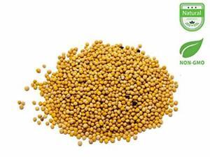 Aiva Mustard Seeds Yellow 1 LB