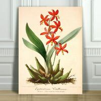 """JEAN LINDEN - Beautiful Red Orchid #21 - CANVAS PRINT POSTER - 16x12"""""""