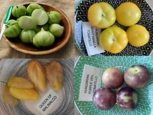 Tomatillo Packet - 4 Varieties - 65+ seeds - Semillas - Graines - Samen