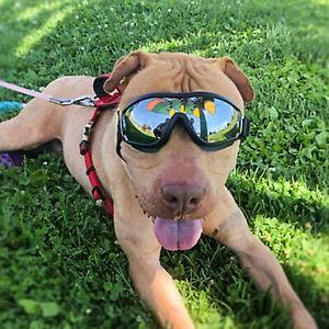Fashion Pet Dog Doggles Goggles UV Sunglasses Eye Wear Protection Glasses NEW