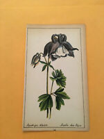 KS) 1878 Botanique Pratique Aquilegia Alpina Original Plant Colored Print