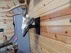 Taxidermy Hardwood Poplar European Skull Wall or Pedestal Antler Mount Plaque -