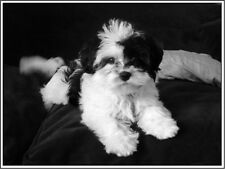 4 Dog Havanese Puppy Greeting Notecards/ Envelopes