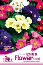 1 Bag 30 Colorful Primrose Flower Seeds Primula Malacoides A080