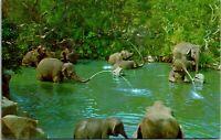 Vtg 1960s Disneyland Postcard Elephant Bathing Pool - Adventureland Unused 1-279