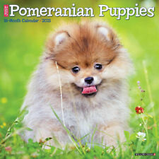 Just Pomeranian Puppies (dog breed calendar) 2021 Wall Calendar (Free Shipping)