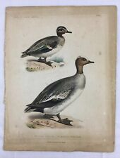 1800's Birds of N America Hand Colored Lithograph Teal & Wigeon Bowen & Co Phila