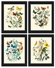 Unframed Butterflies Print Set of 4 Antique Blue Colorful Butterflies Wall Art