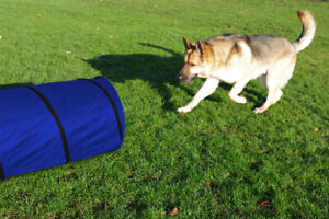 Agility Tunnel Dog Training Outdoor Fun Exercise