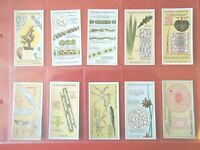 1929 HIDDEN BEAUTIES using microscope Complete Players Tobacco Card Set ex+cards