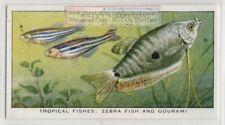 Zebra Fish and Gourami Communinty Tank Fish Freshwater Vintage Trade Ad Card