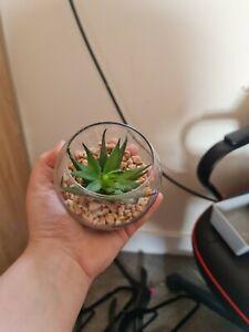 Bundle of 4 Artifical Succulents