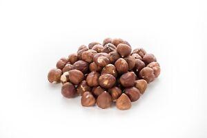 Sunburst Hazelnuts Raw, Whole and Fresh