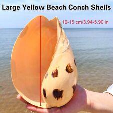Large Beach Conch Shells Natural Sea Snail Aquarium Fish Tank Ornament Gifts