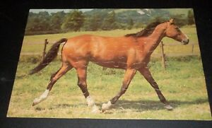 Vintage 1978 THOROUGHBRED HORSE 100 Piece MB Jigsaw Puzzle ~ COMPLETE