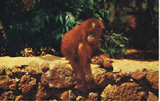 Vintage SAN DIEGO ZOO California YOUNG ORANGUTAN LM-10 Color Postcard UNUSED