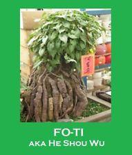RARE!! Fo-Ti (AKA Ho Shou Wu, Multiflora Preparata)HEALING LONGEVITY HERB