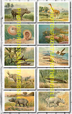 Heinrich Harder Dinosaur Prehistoric Paintings - Collectable Postcard Set # 1