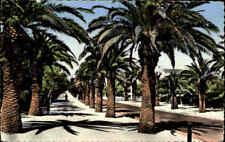 Costa do Sol ESTORIL Portugal Parque Pflanzen Palmen color Postkarte Postcard