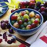 50 x Regenbogen Trauben Bunt Samen Hingucker Pflanze Rarität Obst Neu· V6J1