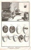 Genuine.Antique.1773.Rustic economy.Art of hatching chickens.Poultry.Art.Hatch