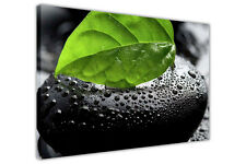 GREEN LEAF PEBBLE CANVAS PRINTS WALL ART PICTURES FRAMED POSTERS FLORAL IMAGES
