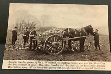 Postcard, Field of Swedes, Sussex