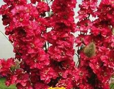 "Organic Flower seeds Larkspur ""Red King"" (Delphinium cultorum) - 100 seeds."