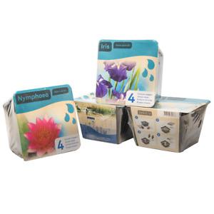 Moerings Garden Pond Plant Kits - Lily, Iris, Acorus, Anemopsis, Butomus, Typha