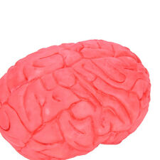 Scary Haunted House HUMAN BRAIN Organ Body Part Halloween Horror Prop Decor QY