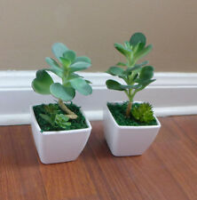 2 New Potted Artificial Desert Grass succulent With Pot Home Table Decoration