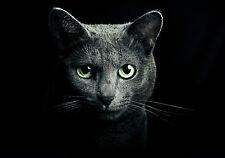Black Cat Green Eyes Giant Poster Art Print - A0 A1 A2 A3 A4 Sizes